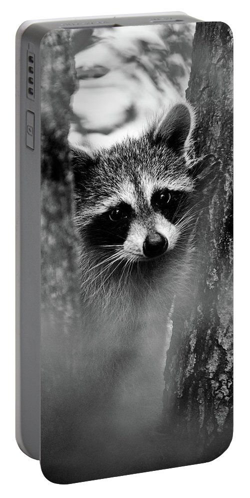 Racoon Portable Battery Charger featuring the photograph On Watch - Bw by Christopher Holmes