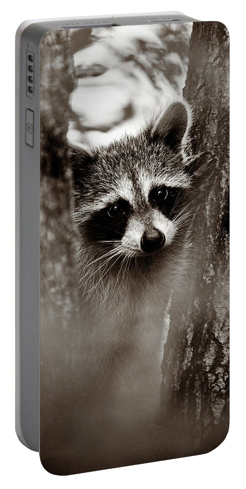 Racoon Portable Battery Charger featuring the photograph On Watch - Sepia by Christopher Holmes