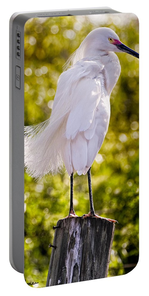 snowy Egret Portable Battery Charger featuring the photograph On Watch by Christopher Holmes