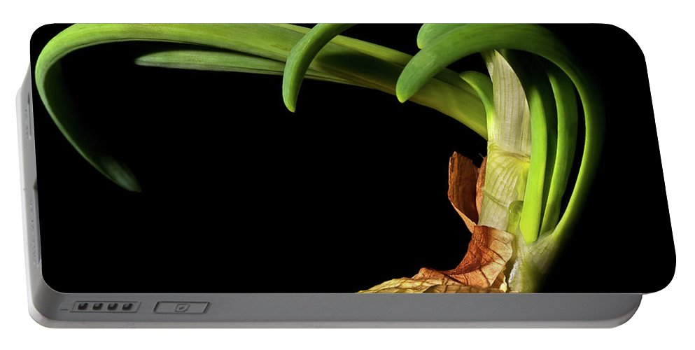 Onion Greens Portable Battery Charger featuring the photograph Onion Sprouting by Onyonet Photo Studios