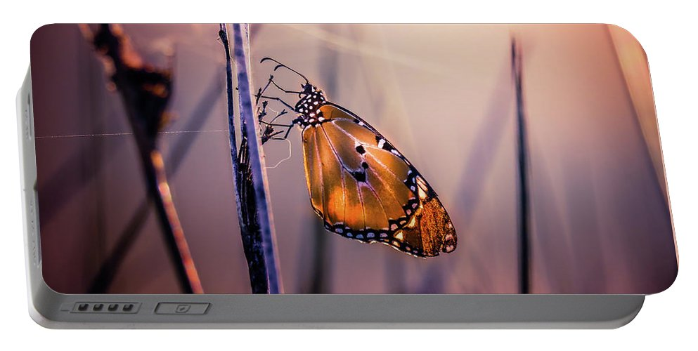 Butterfly Portable Battery Charger featuring the photograph Only Beauty Remains by Alf Kelty