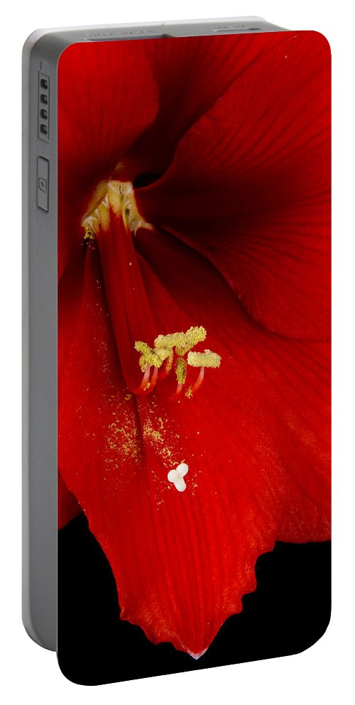 Amaryllis Portable Battery Charger featuring the photograph Orange Amaryllis Hippeastrum Bloom 12-29-10 by James BO Insogna