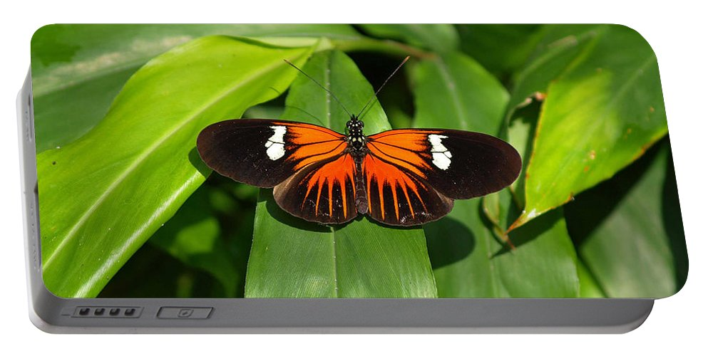 Ann Keisling Portable Battery Charger featuring the photograph Orange And The Black by Ann Keisling