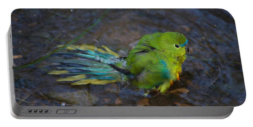 Australian Portable Battery Charger featuring the photograph Orange Belly Bath Time by Graham Palmer