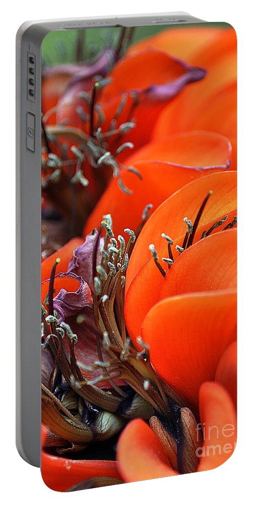 Clay Portable Battery Charger featuring the photograph Orange by Clayton Bruster