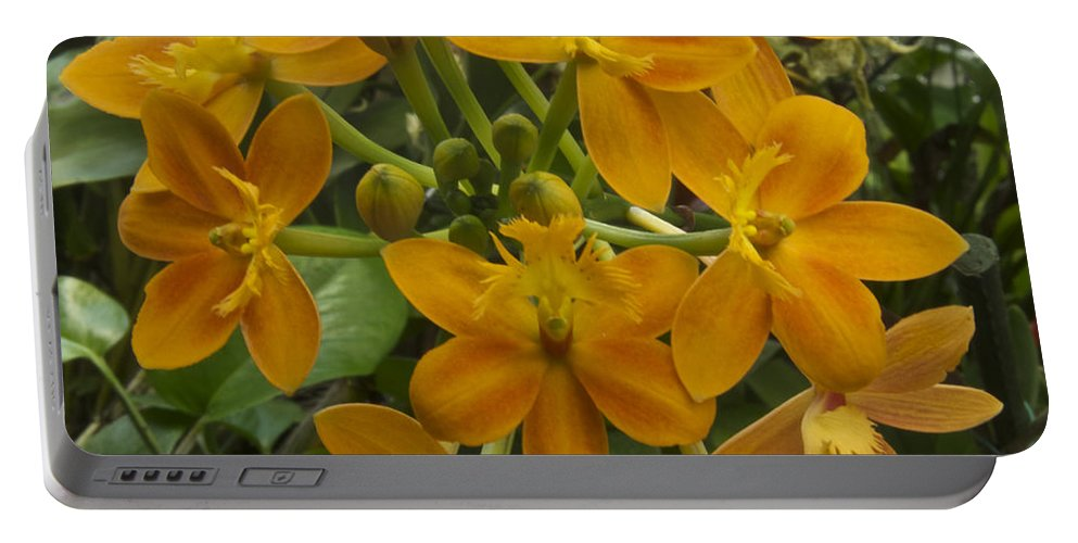 Flower Portable Battery Charger featuring the photograph Orange Cluster by Michael Peychich