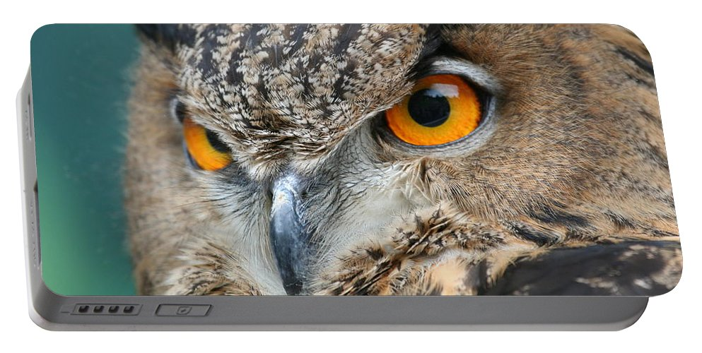 Owl Portable Battery Charger featuring the photograph Orange Crush by Laddie Halupa