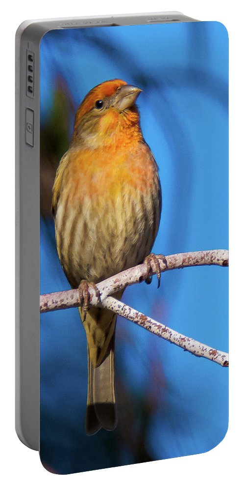 House Finch Portable Battery Charger featuring the photograph Orange Finch by Michael Allred