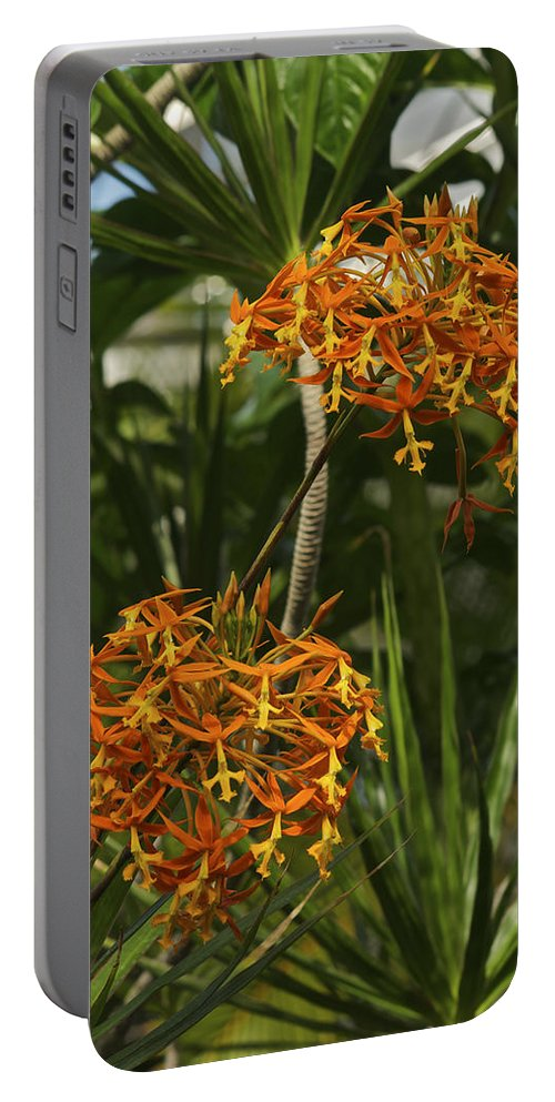 Hawaii Portable Battery Charger featuring the photograph Orange Globes by Michael Peychich