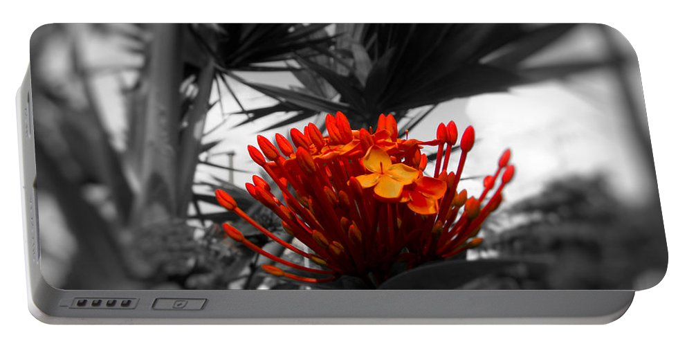 Orange Flower Portable Battery Charger featuring the photograph Orange Magnificence by Douglas Barnard