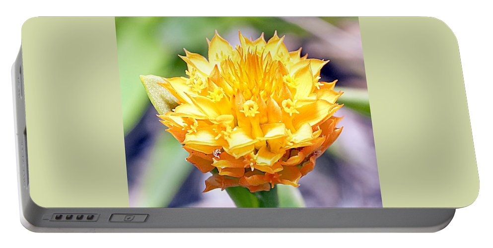Flower Portable Battery Charger featuring the photograph Orange Milkwort Flower by Kenneth Albin