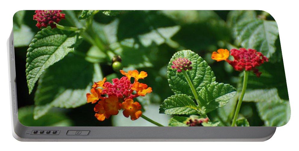 Orange Portable Battery Charger featuring the photograph Orange Red Flowers by Rob Hans