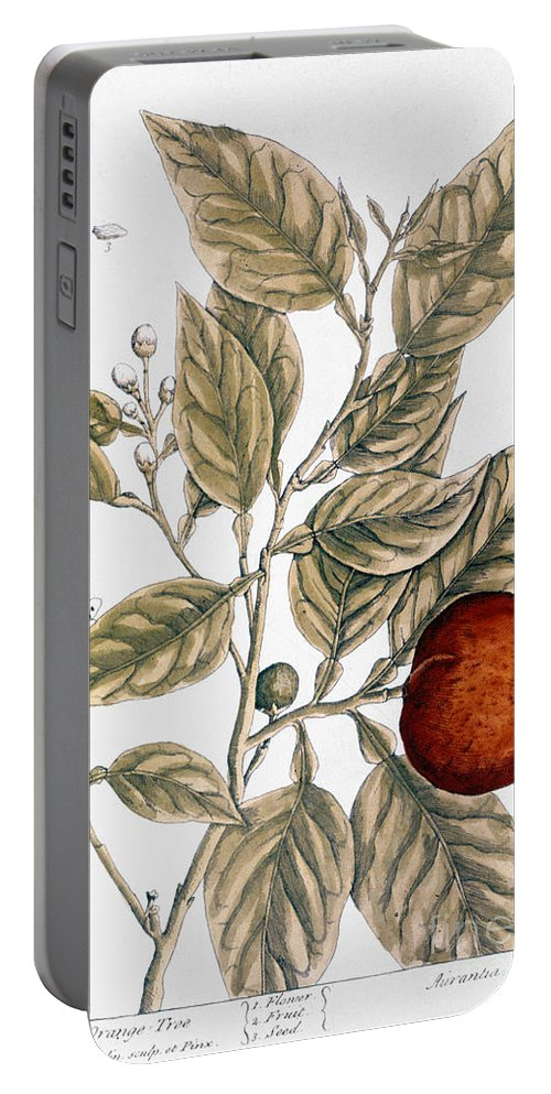 1730s Portable Battery Charger featuring the photograph Orange Tree, 1735 by Granger