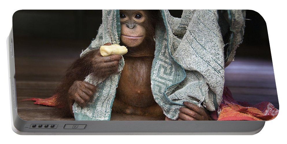 00486841 Portable Battery Charger featuring the photograph Orangutan 2yr Old Infant Holding Banana by Suzi Eszterhas