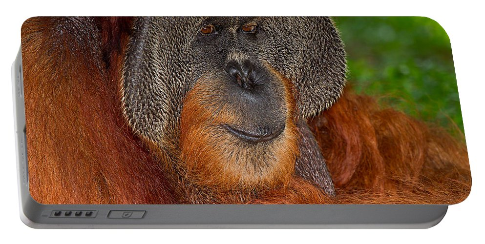 Nature Portable Battery Charger featuring the photograph Orangutan Male by Louise Heusinkveld