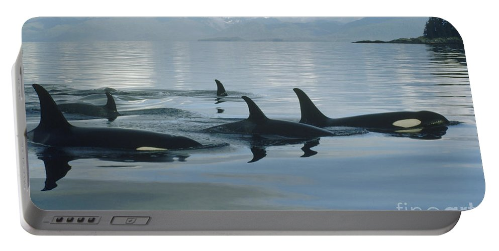 00079478 Portable Battery Charger featuring the photograph Orca Pod Johnstone Strait Canada by Flip Nicklin