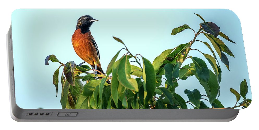 Orchard Oriole Portable Battery Charger featuring the photograph Orchard Oriole Songbird Perched On A Bush by Patrick Wolf