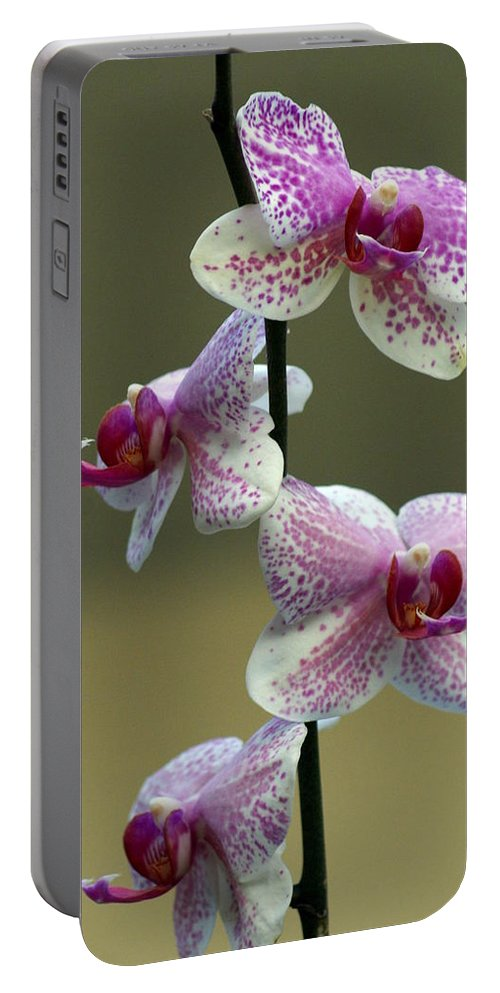 Flower Portable Battery Charger featuring the photograph Orchid 16 by Marty Koch