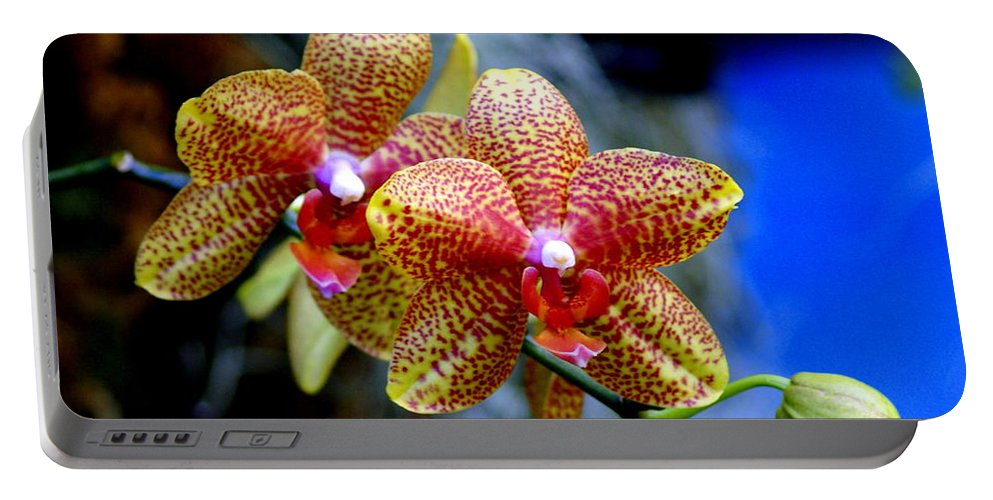 Flower Portable Battery Charger featuring the photograph Orchid 17 by Marty Koch