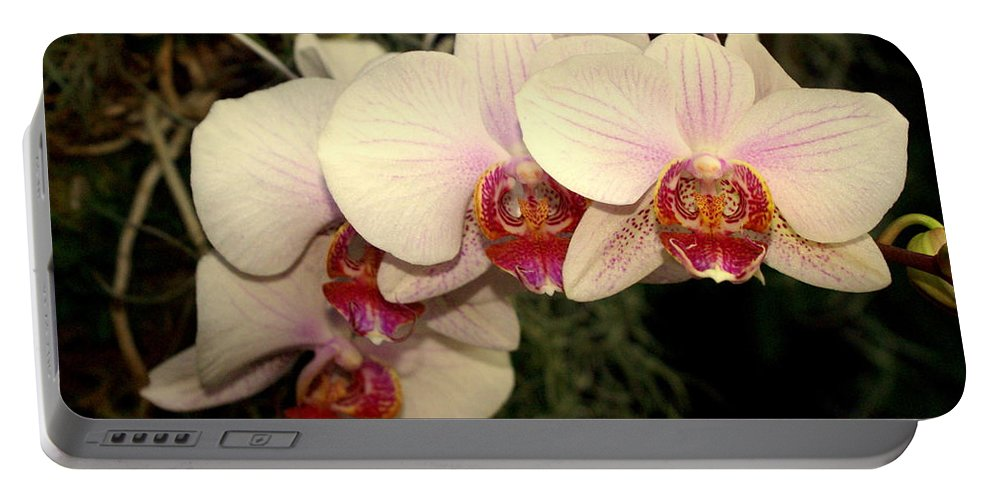Flower Portable Battery Charger featuring the photograph Orchid 19 by Marty Koch
