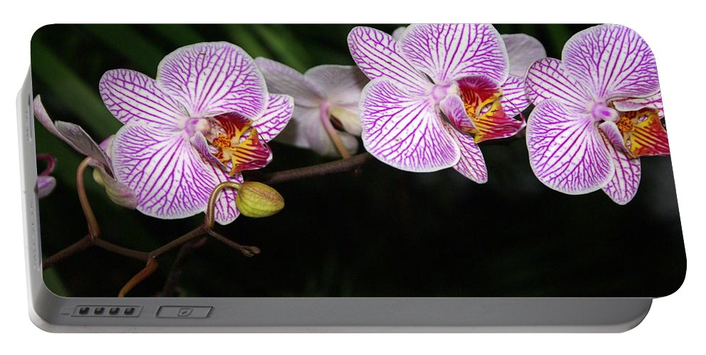 Flower Portable Battery Charger featuring the photograph Orchid 2 by Marty Koch