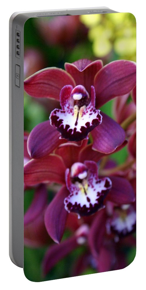Flower Portable Battery Charger featuring the photograph Orchid 20 by Marty Koch
