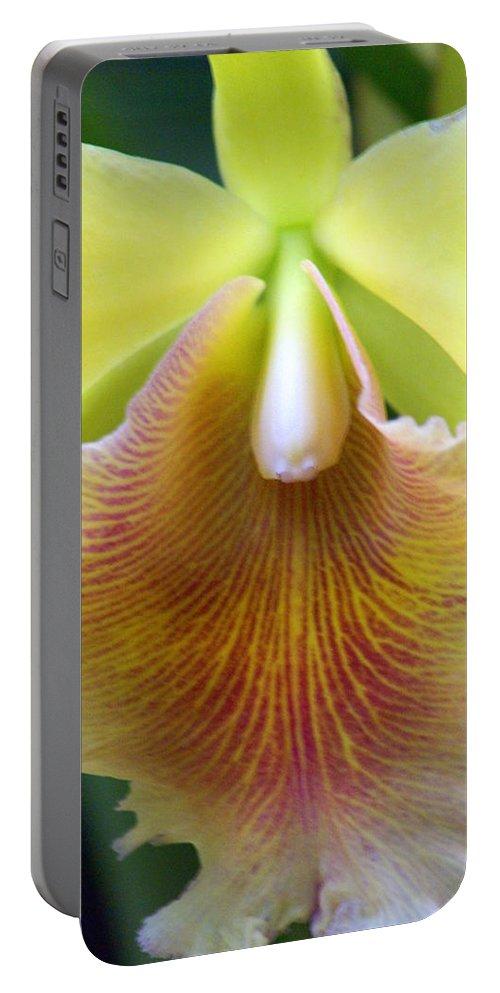 Flower Portable Battery Charger featuring the photograph Orchid 21 by Marty Koch