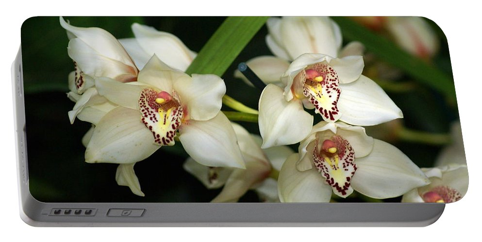 Flower Portable Battery Charger featuring the photograph Orchid 3 by Marty Koch