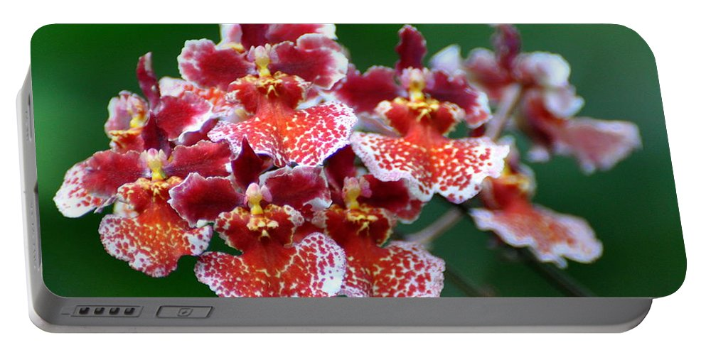 Orchid Portable Battery Charger featuring the photograph Orchid 31 by Marty Koch