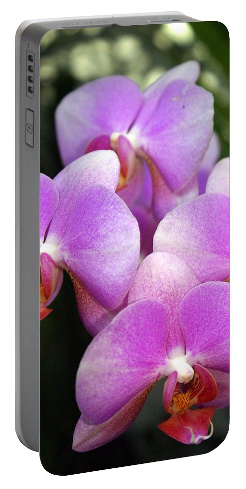 Flower Portable Battery Charger featuring the photograph Orchid 5 by Marty Koch