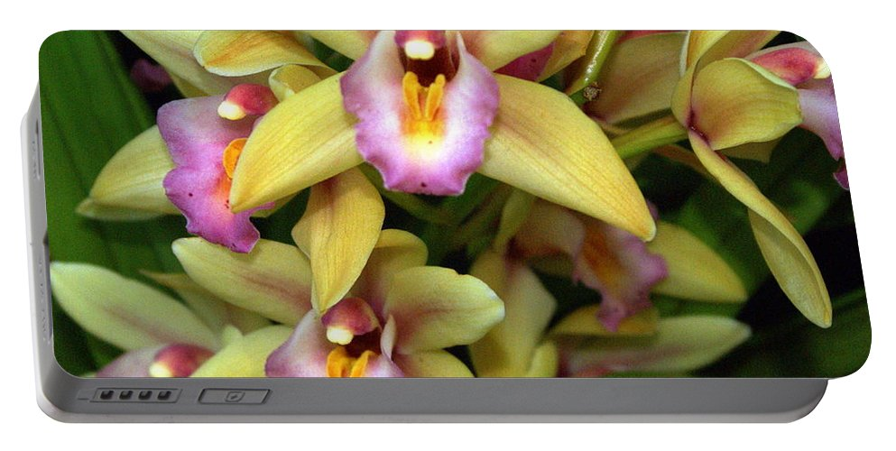 Flower Portable Battery Charger featuring the photograph Orchid 7 by Marty Koch