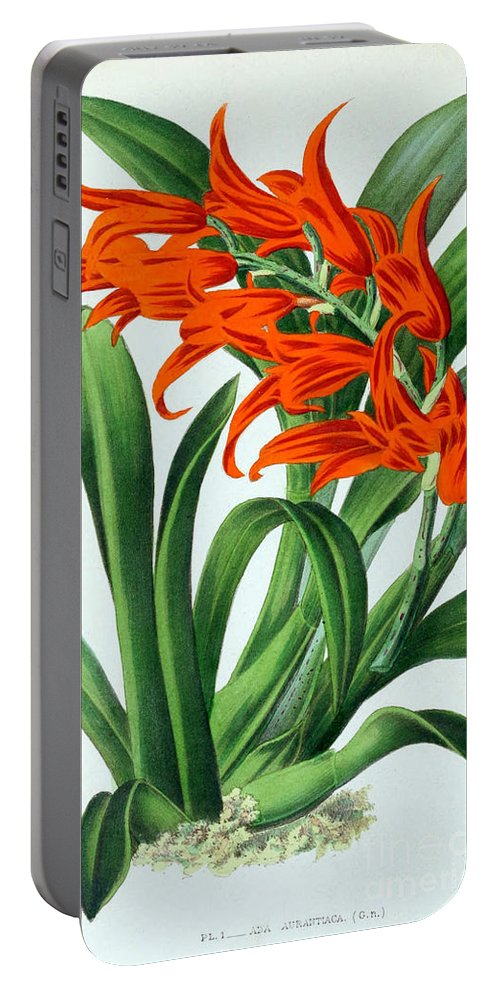 Horticulture Portable Battery Charger featuring the photograph Orchid, Ada Aurantiaca, 1880 by Biodiversity Heritage Library