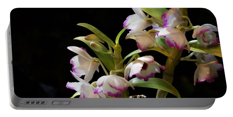 Orchid Portable Battery Charger featuring the photograph Orchid Blooms by Joanne Smoley