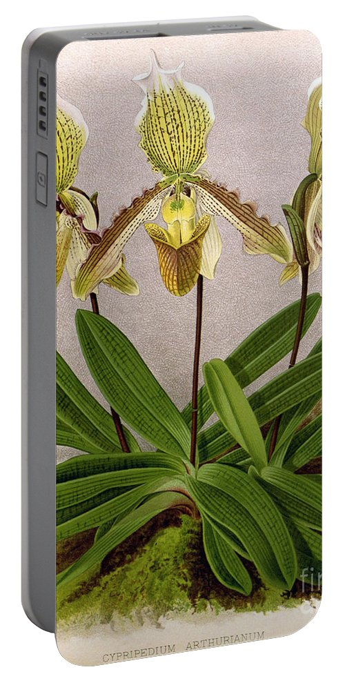 Horticulture Portable Battery Charger featuring the photograph Orchid, Cypripedium Arthurianum,1891 by Biodiversity Heritage Library