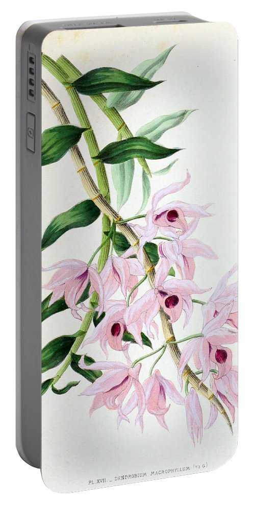 Horticulture Portable Battery Charger featuring the photograph Orchid, Dendrobium Macrophyllum, 1880 by Biodiversity Heritage Library