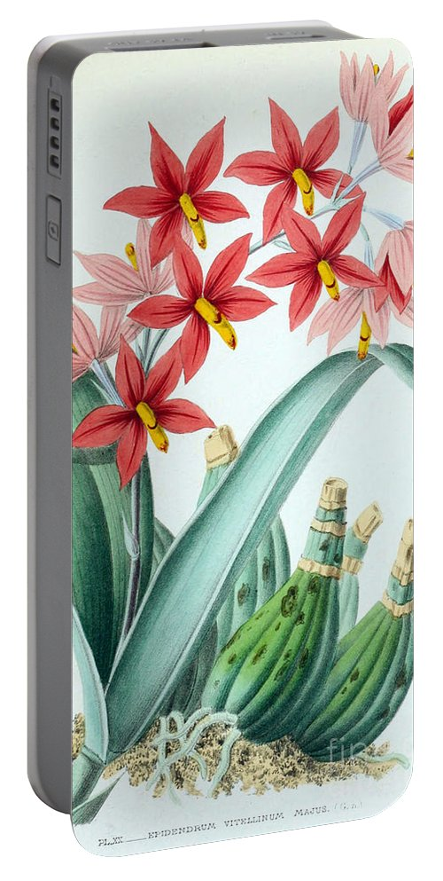 Horticulture Portable Battery Charger featuring the photograph Orchid, E. Vitellinum Majus, 1880 by Biodiversity Heritage Library