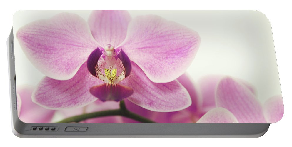 Orchid Portable Battery Charger featuring the photograph orchid III by Hannes Cmarits
