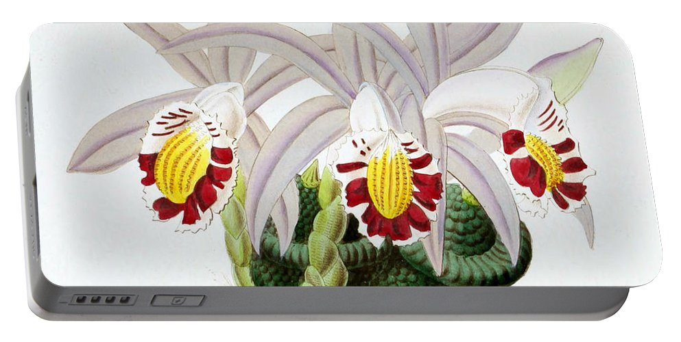 Horticulture Portable Battery Charger featuring the photograph Orchid, Pleione Lagenaria, 1880 by Biodiversity Heritage Library