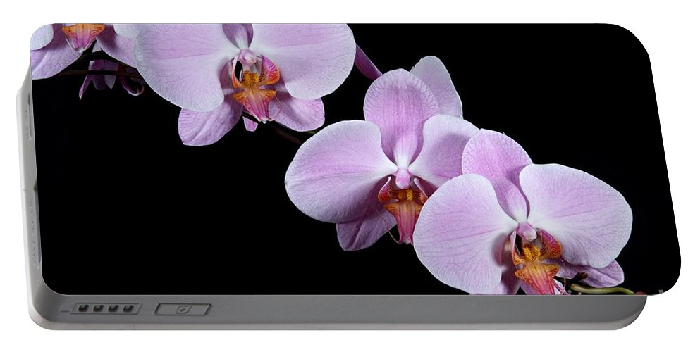 Beauty Portable Battery Charger featuring the photograph Pink Orchid I by Ralf Broskvar