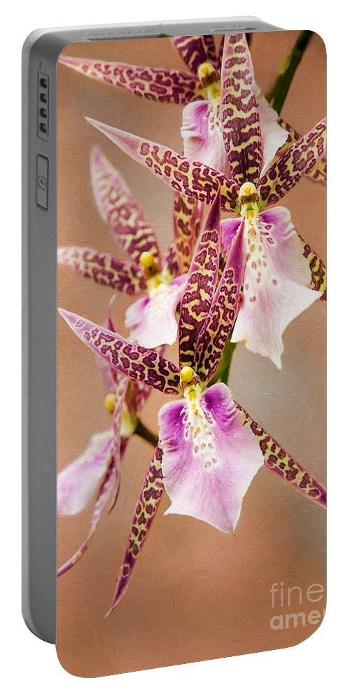 Nature Portable Battery Charger featuring the photograph Orchid Stars by Sharon McConnell