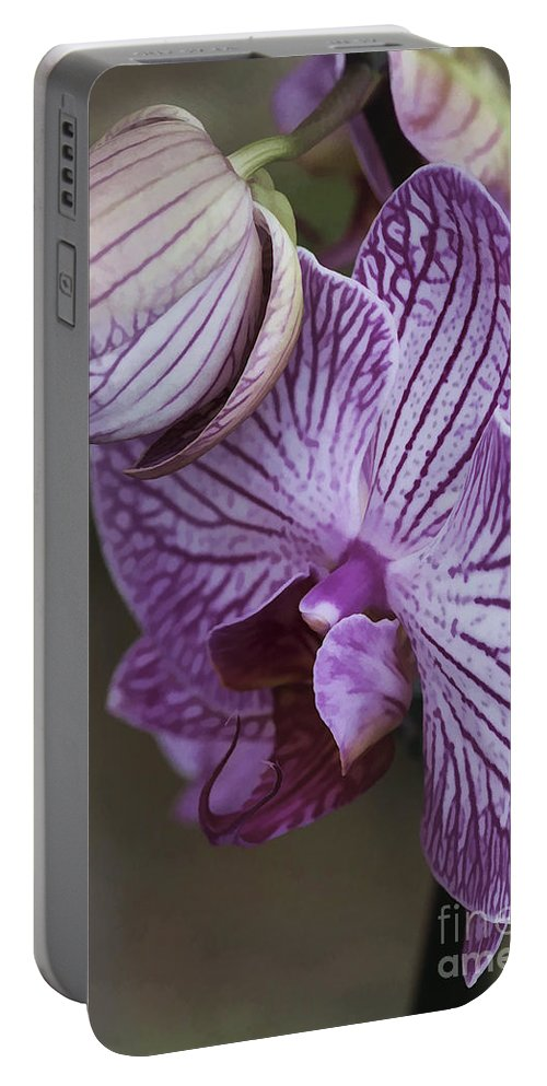 Flower Portable Battery Charger featuring the photograph Orchid Strips by Deborah Benoit