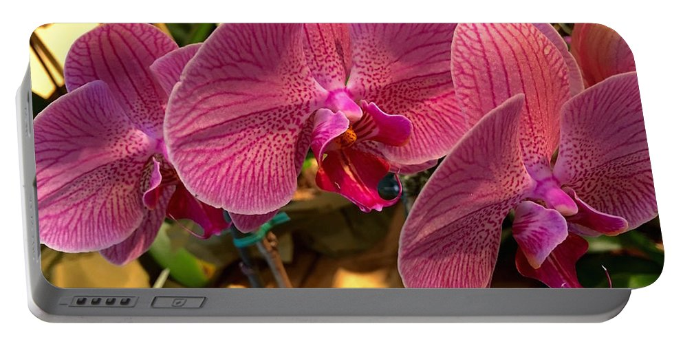 Orchids In Bloom Portable Battery Charger featuring the photograph Orchids In Bloom by Jeannie Rhode