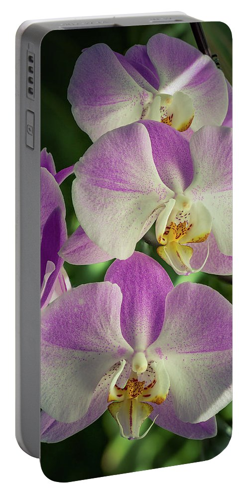 Stock Portable Battery Charger featuring the photograph Orchids by Joshua Corrigan