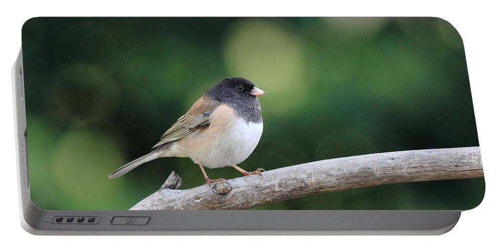 Wildlife Portable Battery Charger featuring the photograph Oregon Junco by Wingsdomain Art and Photography