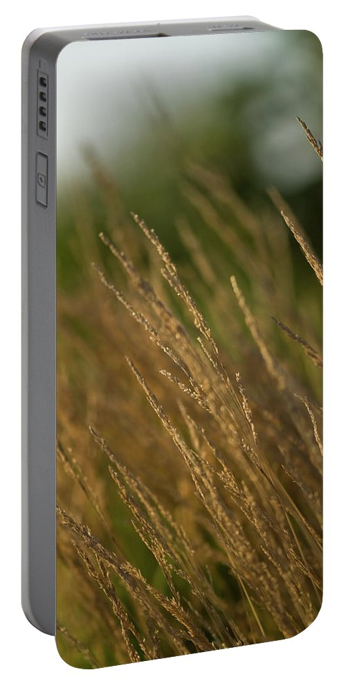 ornamental Grass Portable Battery Charger featuring the photograph Ornamental Naturally by Paul Mangold