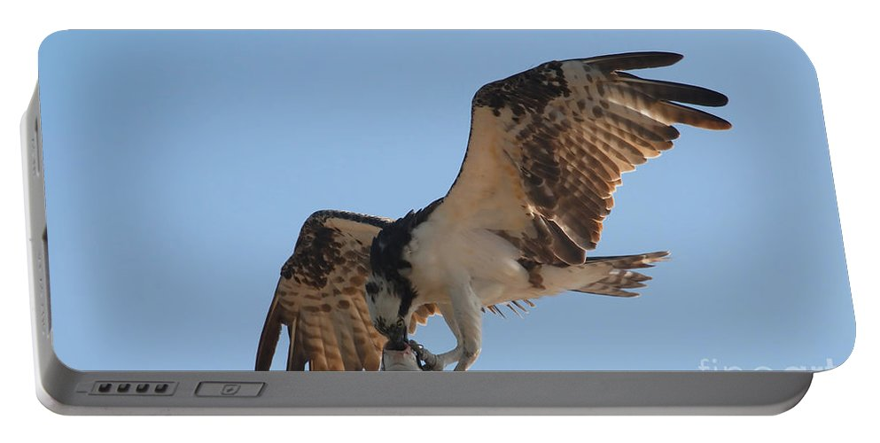 Osprey Portable Battery Charger featuring the photograph Osprey by David Lee Thompson
