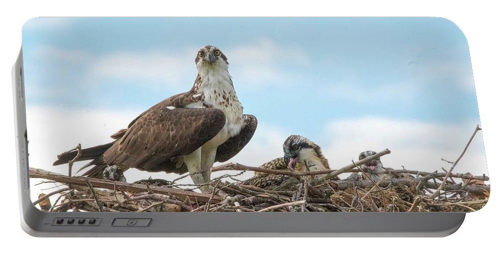 Osprey Portable Battery Charger featuring the photograph Osprey Family by Michael CrowderPhotography