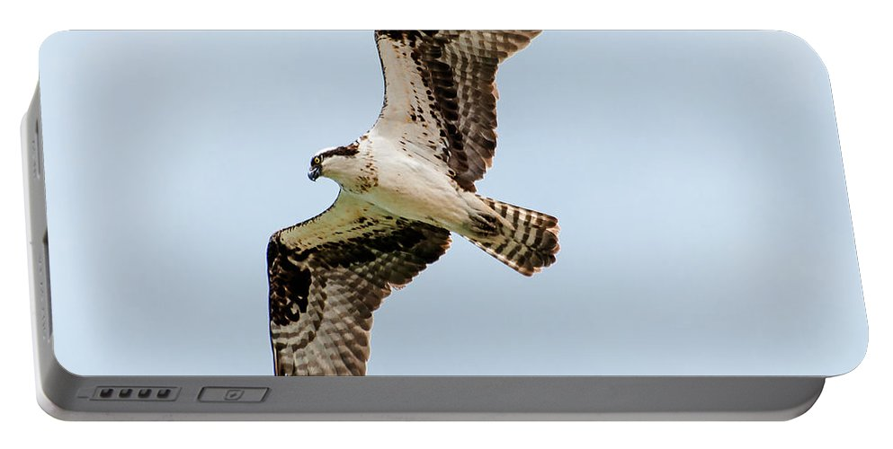 Bif Portable Battery Charger featuring the photograph Osprey Hovering by John Bartelt