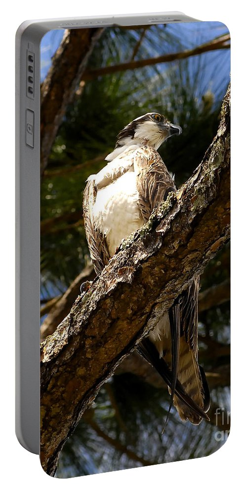 Osprey Portable Battery Charger featuring the photograph Osprey Hunting by David Lee Thompson