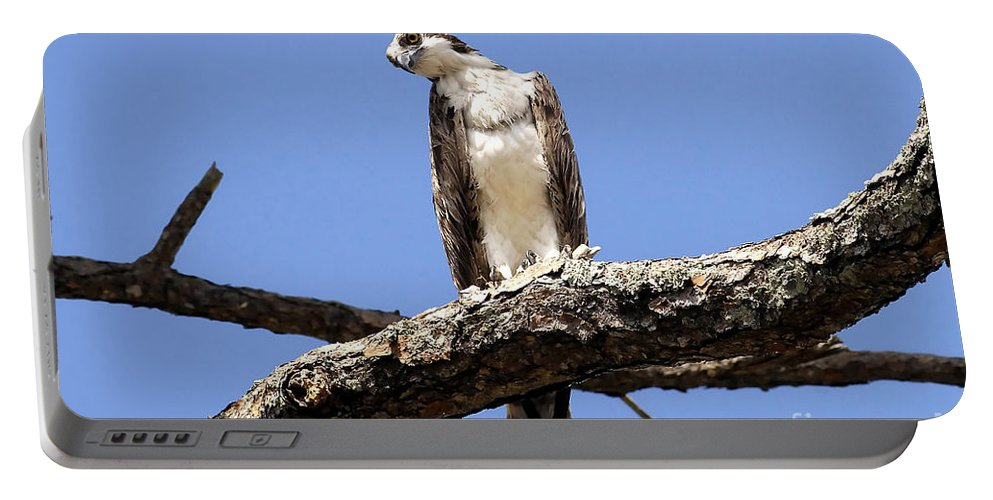 Osprey Portable Battery Charger featuring the photograph Osprey In The Trees by David Lee Thompson